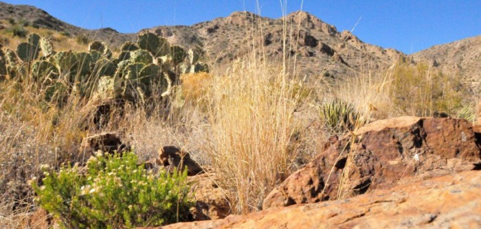 Desert_plants_in_Texas-e1392925905166